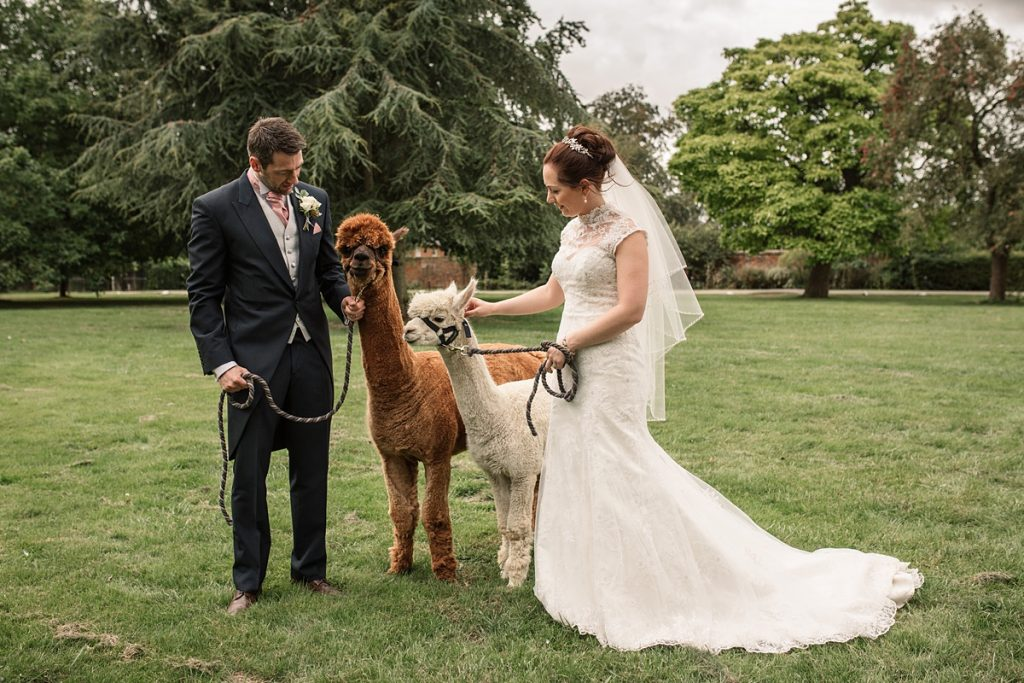 Bride and groom with alpacas at Offley Place Wedding, taken by Becky Harley Photography