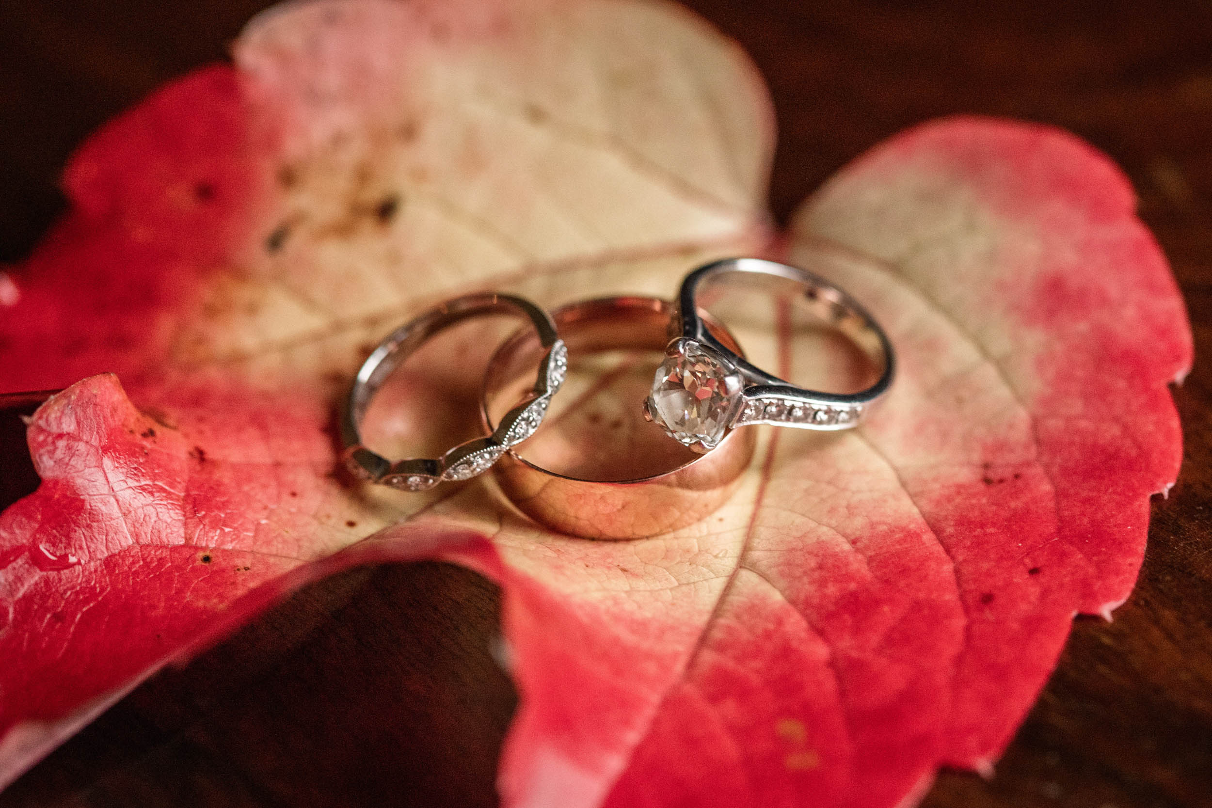 Wedding rings At autumnal Offley Place wedding taken by Becky Harley photography